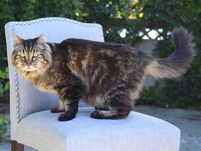 World's oldest cat