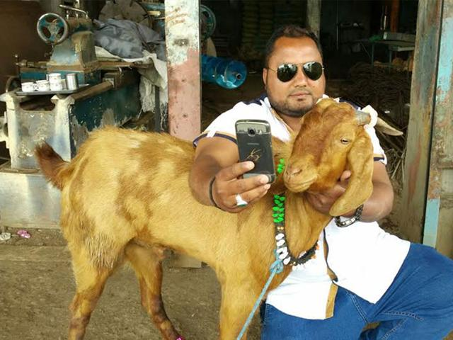 A man taking selfie with male goat that gives milk in Barwani. (HT photo)