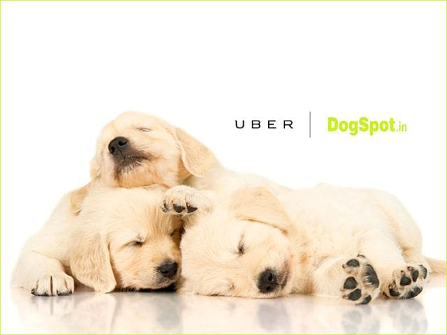 Uber has tied up with DogSpot.in to send out puppies.