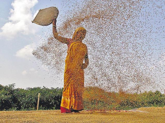 Research shows that spending an extra Rs 5.5 trillion on agrarian research over the next 15 years will boost yield by an additional 0.4 percentage points each year. (Reuters)