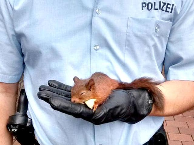 Squirrels,Germany,Animal attacks