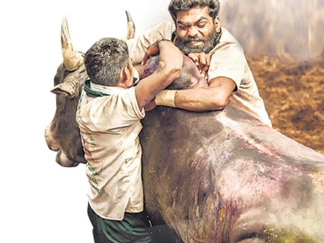 The Supreme Court banned 'jallikattu' (bull fighting) and bullock cart racing in Tamil Nadu in 2014 because of animal cruelty. The court also banned bullock cart racing in Maharashtra. (HT Photo)