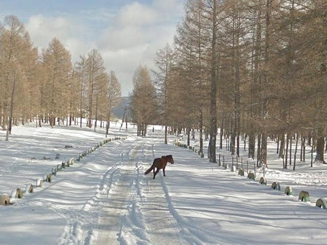 This handout image released by Google shows a Google Street View image of a horse on a road near Ulan Bator in Mongolia. Google's Street View service launched on July 23, 2015 in the landlocked Asian nation of Mongolia. (AFP PHOTO/ GOOGLE)