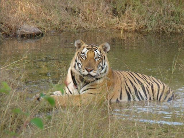 Panna Tiger Reserve,National Tiger Conservation Authority,Ken-Betwa river-link project
