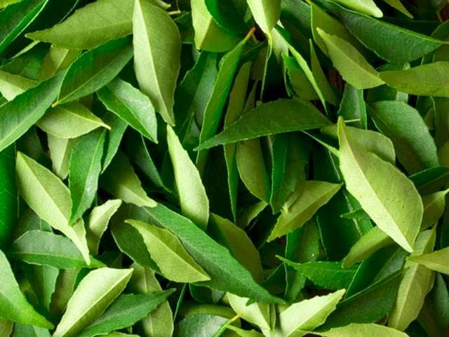 Curry leaves, commonly known to add aroma and flavour to food, are also a rich source of beta-carotene and protein, known to control hair loss and encourage healthy hair growth. (Shutterstock Photo)