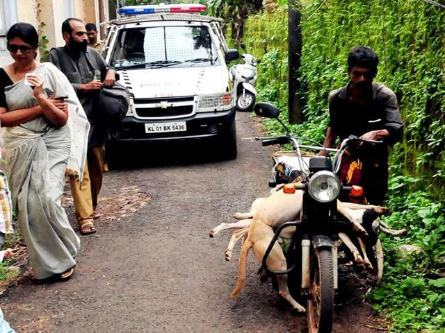 Carcasses of culled dogs being ferried on a moped in Kunnur, Kerala. At least 40 stray dogs have been reportedly killed by a four-member team at the behest of a village panchayat on Saturday triggering massive protest by animal lovers in the state. (Ramesh Babu/HT Photo)