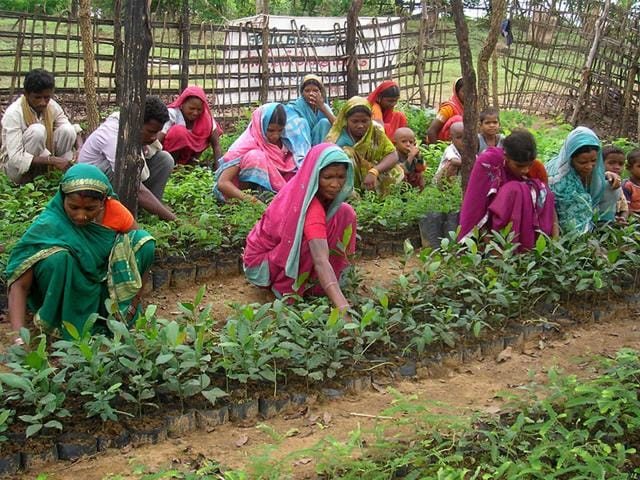Tribals in ten villages of Betul district are cultivating expensive nuts like cashew and almonds. (HT photo)