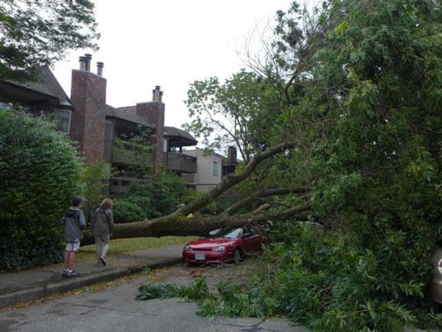 Trees were brought crashing down as heavy rain and storm wrecked havoc in Vancouver. (Photo credit-The Province)