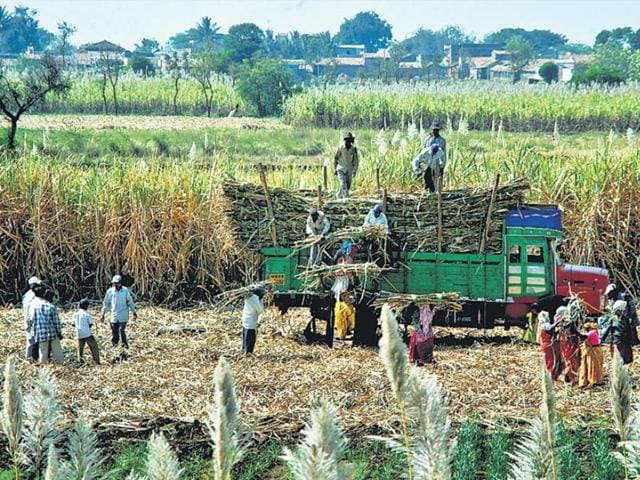 In Maharashtra's Satara district, molasses from sugarcane is processed to generate power and also used as fertiliser for crops. (HT file photo)