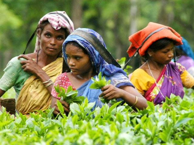 Indian tea plantation workers pick leaves in a tea garden in Jorhat, Assam. Children have gone missing from the tea gardens of Assam, feared to have been lured by traffickers active in an economically-backward region, according to activists and the government. (AFP file photo)