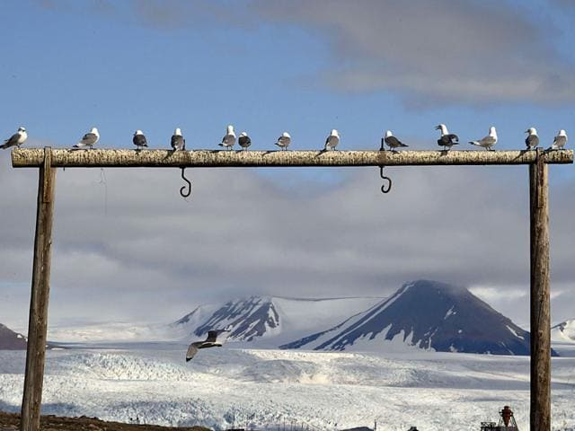 Seagulls sit on a wooden construction near the Nordenskjodbreen glacier (AFP Photo)