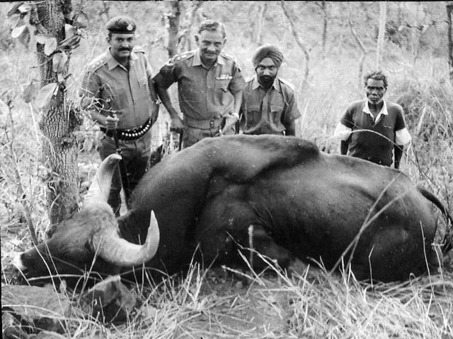 A Gaur shot by Col. Michigan with a .455 double-barrel rifle in 1970 in the Sathyamangalam forests, Tamil Nadu. To the right of Col. Michigan is then 2nd Lt. Sarbjit S. Randhawa. The Gaur was hit on the shoulder with the first shot but ran 10 km. The wounded Gaur was delivered a coup de grace with a .30 calibre weapon and the .455 rifle. The Gaur's head is on display at the OTA Officers' Mess, Chennai. Photo credit: RANDHAWA FAMILY ARCHIVE