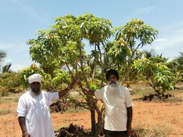 Many farmers from Punjab sold their fields and bought very cheap land in the backwoods of Tamil Nadu, with prices as low as Rs 10,000 to Rs 20,000 an acre. HT Photo