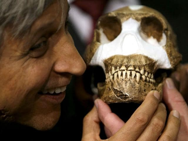 A composite skeleton of Homo naledi surrounded by some of the hundreds of other fossil elements displayed in Magaliesburg, South Africa on Thursday. Scientists say they've discovered a new member of the human family tree, revealed by a huge trove of bones in a barely accessible, pitch-dark chamber of a cave in South Africa, showing a surprising mix of human-like and more primitive characteristics. (AP Photo)