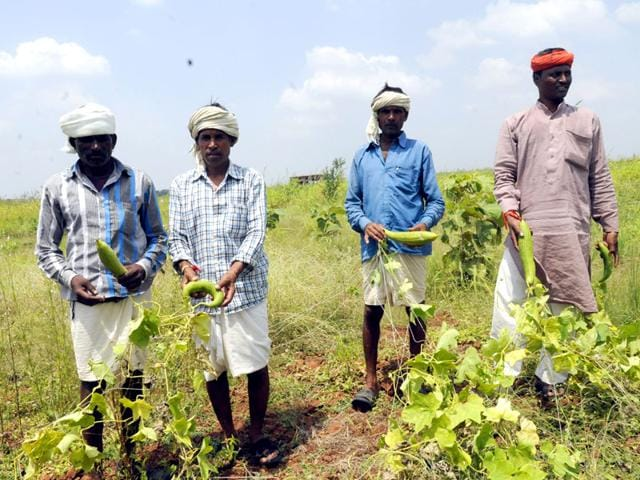 Sur Singh Meena (extreme right), along with other tribals, in village Chhaya Paschim showing the organic vegetable (sponge gourd) they have grown without using any chemical fertilizer or pesticide. (Shankar Mourya/HT Photo)