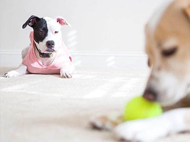 Dogs,Jealous,Care