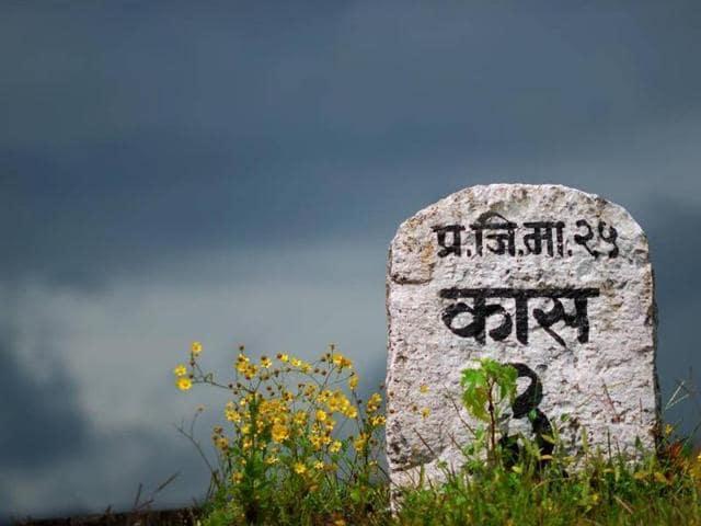 Kaas,Maharashtra,HT48Hours