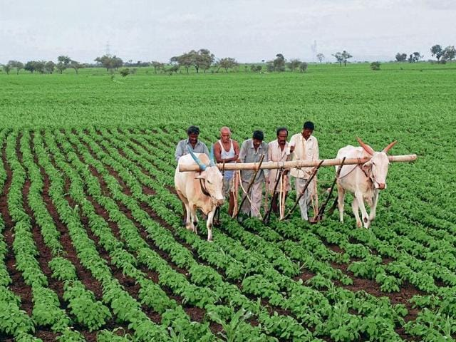 Farmers in nearly 13 states now use the SRI method.