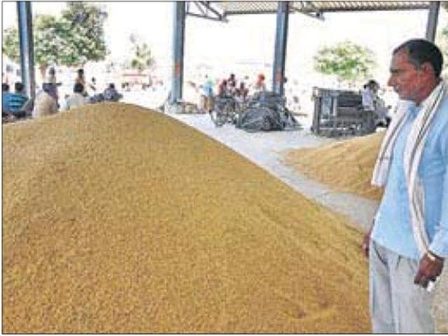 A farmer with his unsold paddy produce at the new grain market in Karnal during the rice millers' strike.(HT FILE PHOTO)