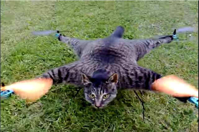 'Orvillecopter' is  a dead  pet cat converted into a copter  by a Dutch Artist.