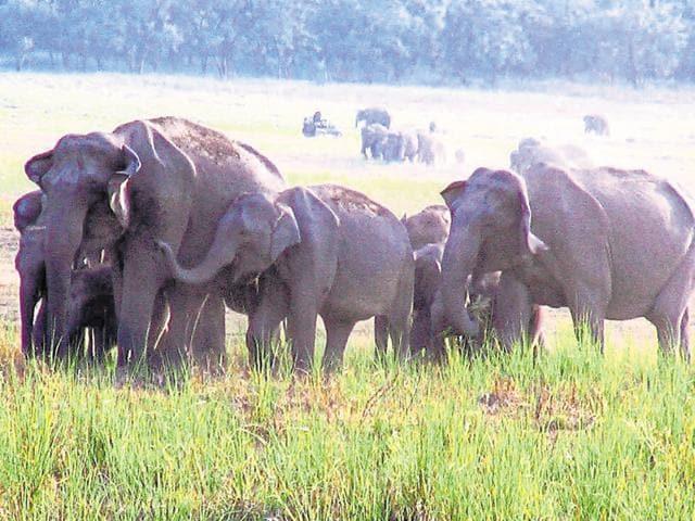 Human-elephant conflict,Rajaji Tiger Reserve,Haridwar forest