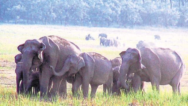 elephant rehab,West Bengal elephants,rogue elephants