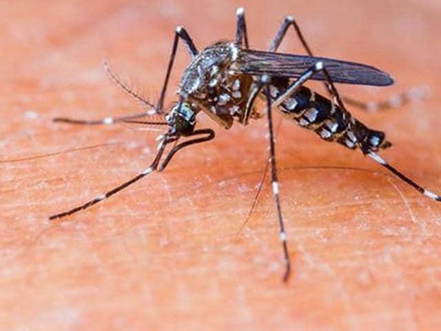Dengue,Jammu,Jammu and Kashmir