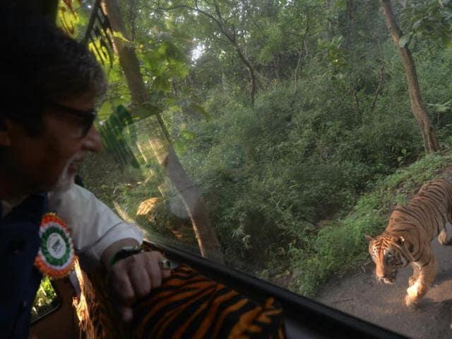 Amitabh Bachchan,Amitabh Bachchan chased by tiger,Big B