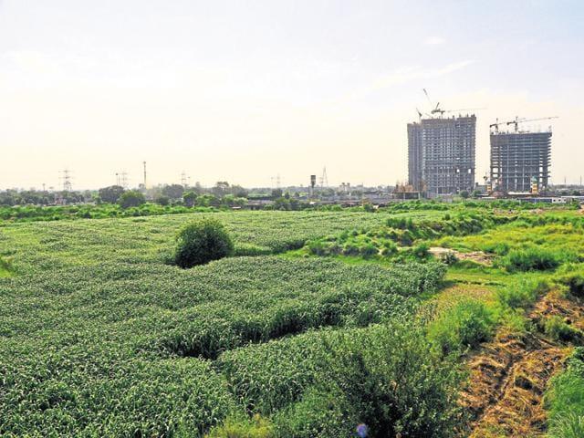 Noida district centre