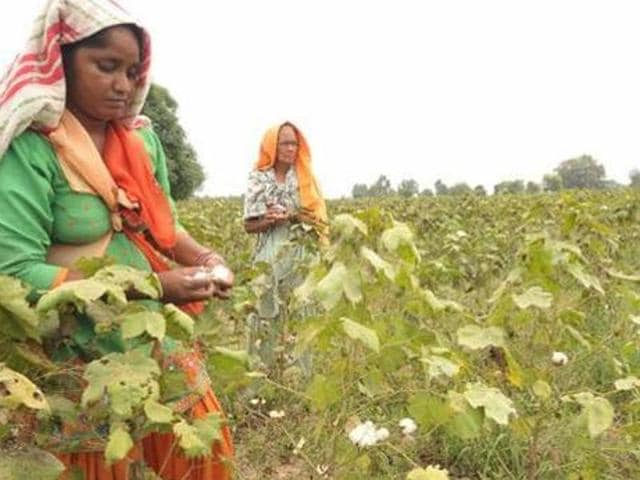 Pesticides,Punjab,Whitefly attack