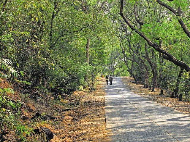 Species,Bombay HC,SGNP