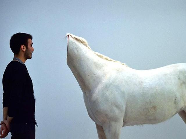 A man looks at a decapitated horse, an art piece by Chinese artist Huang Yong Ping. Horse slaughter is effective banned in the US through a convoluted budget tactic while two bills are pending before the US Congress to make it permanent.