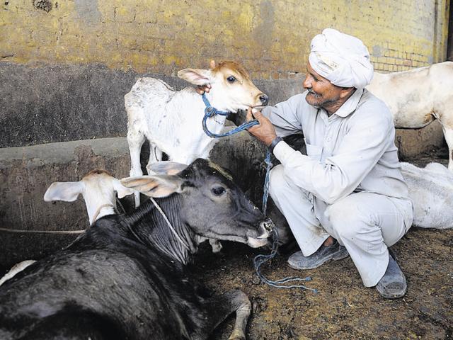 Bisada,cow slaughter,gaushala