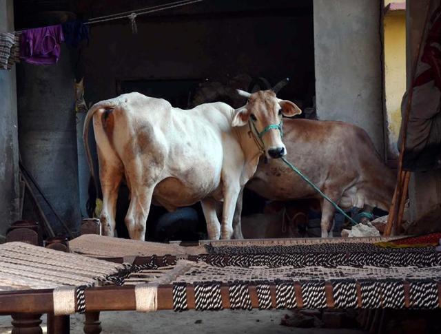 Indian beef bans,Manas Chakravarty columns,Politicisation of beef
