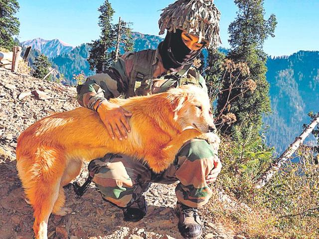 A dog with a sentry at a post near LoC in Poonch sector.(Rahul Singh/HT)