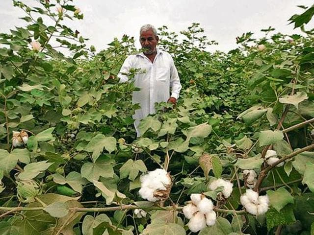 The combined output of cotton in the two states was expected to be 22 lakh bales, down from 39 lakh bales last season.