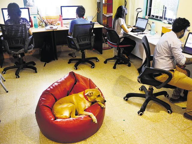 Pets at work,Pets as stress busters,Stress