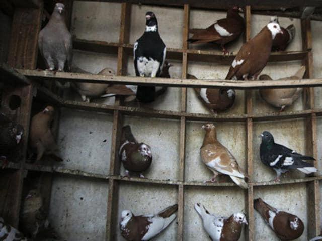 Pet trade,Pet business,Regulations
