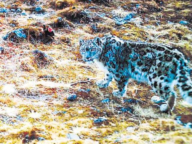 U'khand: Scientists to find ways to protect wildlife from climate change | dehradun