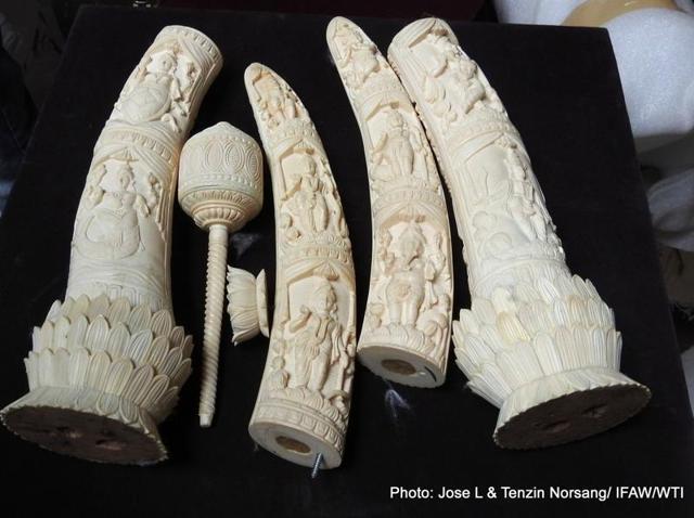 Ivory seizure,Umesh Aggarwal,Poaching