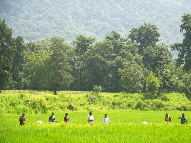 Farmers in Odisha's Bargarh swear by traditional methods