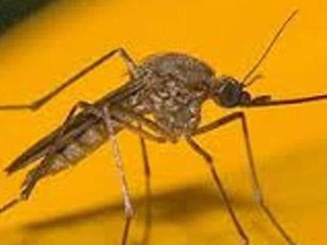 City hospitals,dengue,Ludhiana