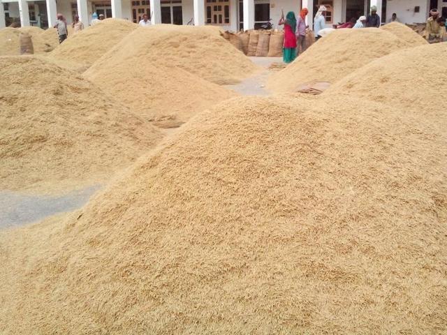 paddy growers,prices,Haryana