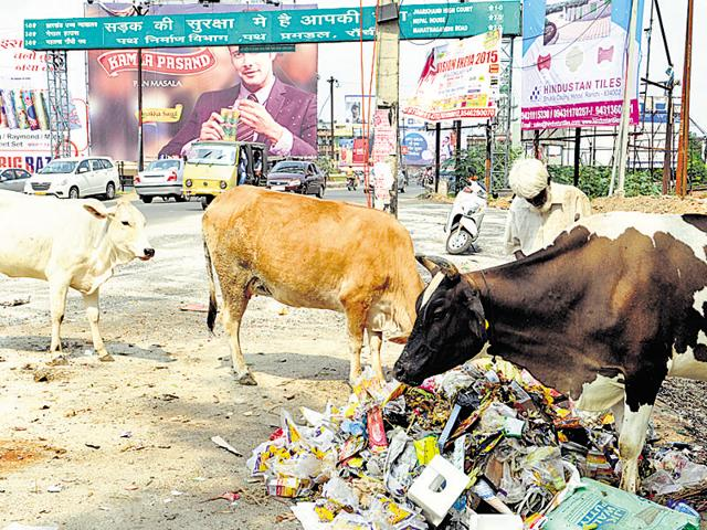In Jharkhand, there are around 42 lakh head of cattle (fertile), and 70% of them are cow. The ID card will be fixed as a tag around its ears and the owners will get a booklet where they would fill cow data every day.