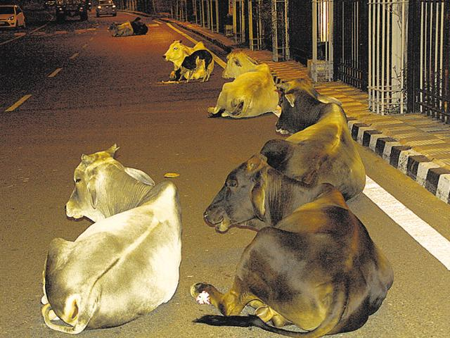 Government plans to provide shelter to 1.17 lakh stray cows and bulls.