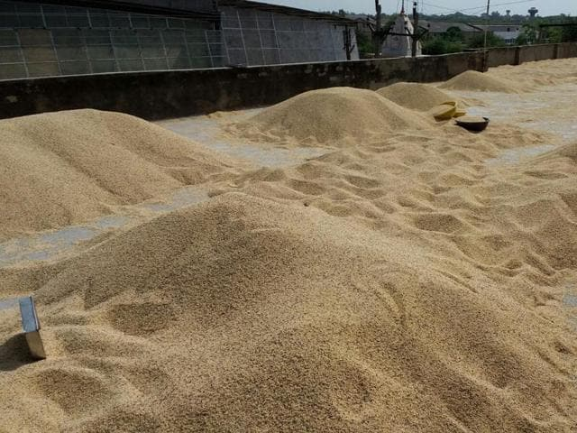 Large stock of pulses was seized by Neemuch district administration on Sunday.(HT Photo)