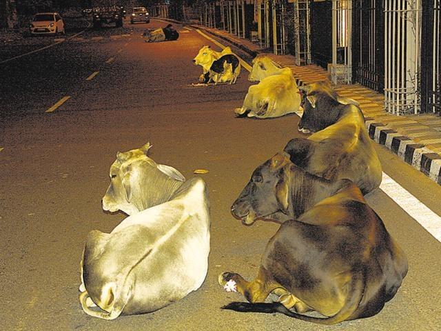 cow sanctuary,Shivraj Singh Chouhan,MP Cow Protection Board