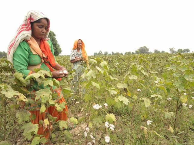 Govt to buy more cotton from farmers as China trims imports