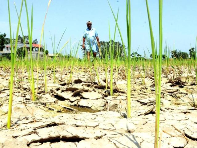 Villagers cite crop loss and debt burden as the alleged reasons of all the suicides. (Representative photo)