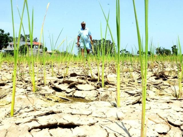 Dry canals, deficit rainfall plague Bihar's record farm yield zone